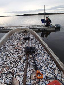 vårdfiske